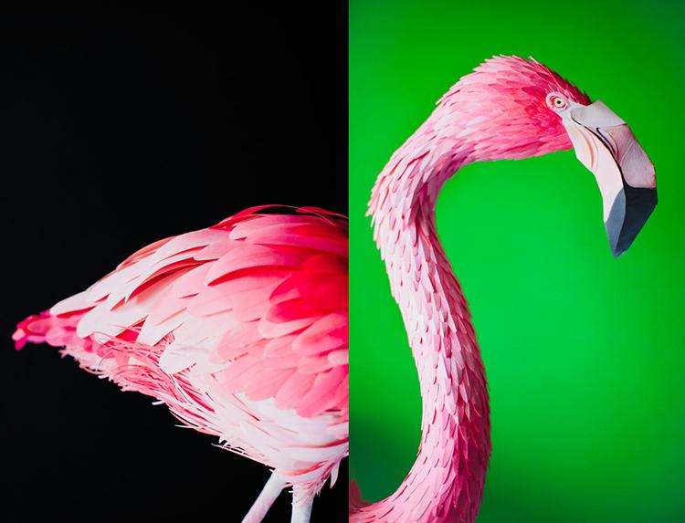 Bird-Paper-Sculptures-by-Diana-Beltran-Herrera-appleman-magazine-agencia-publicidad-sevilla-johnappleman-011