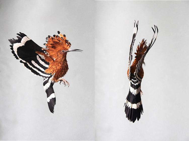 Bird-Paper-Sculptures-by-Diana-Beltran-Herrera-appleman-magazine-agencia-publicidad-sevilla-johnappleman-014