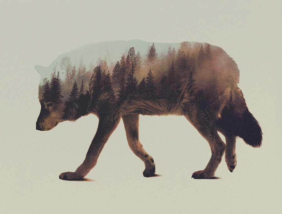 lobo-fotografia