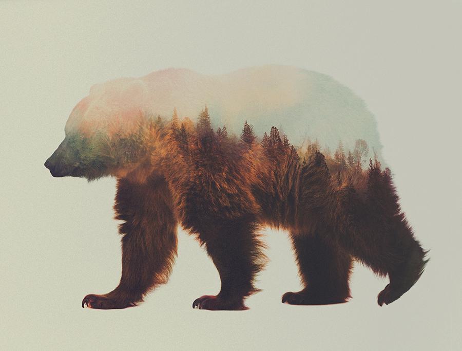 oso-nordico-paisaje-doble-exposicion