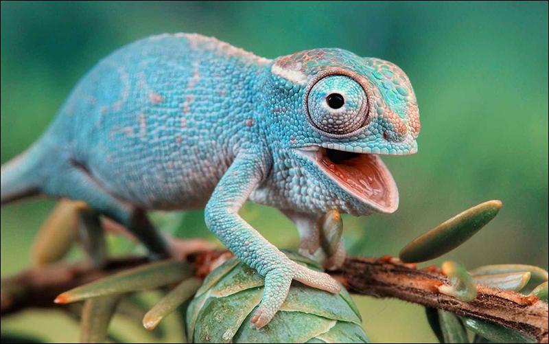 responsive-adaptable-camaleon